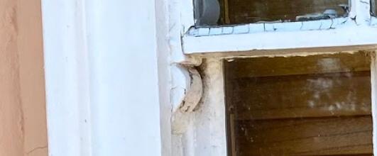 sash window horn
