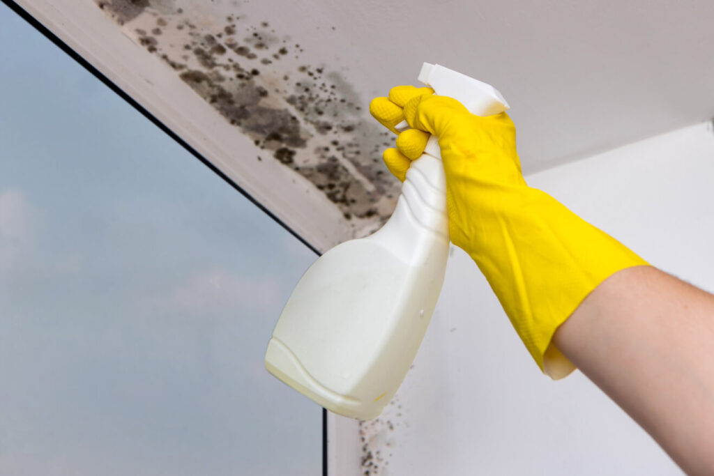 Removing black mould from window