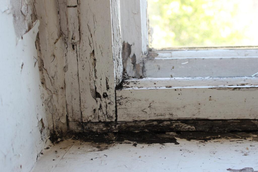 mold on wooden window